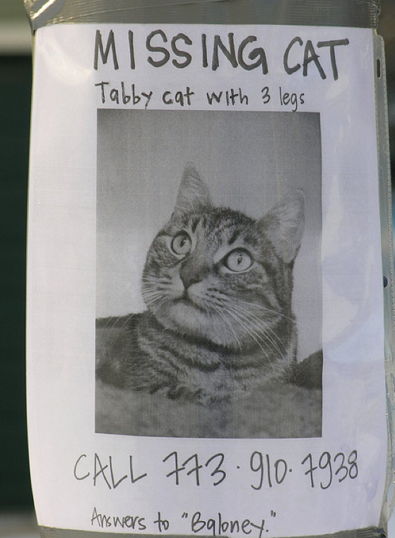 Missing Cat Poster Funny